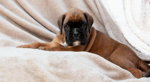 Pups Cailey maart 2019