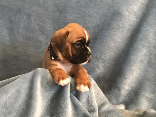 Djalina 4 weken