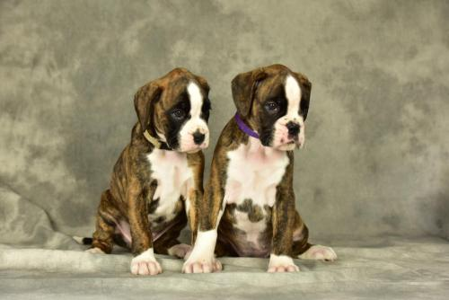 pups cailey 2017 -1